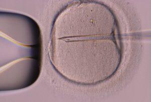 Fecundación asistida Concebir